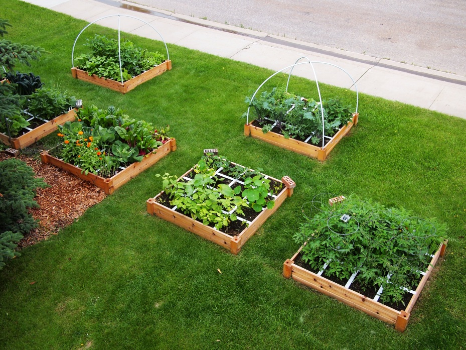 urban raised beds