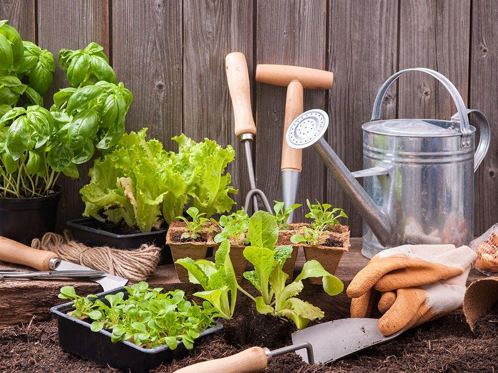 Northern Gardening